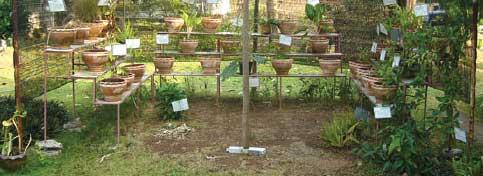 medicinal_garden